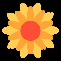 Flor de caléndula plana