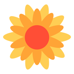 Flor de calêndula plana