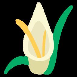 Calla Lilien Blume flach