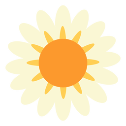 Margarida flor plana