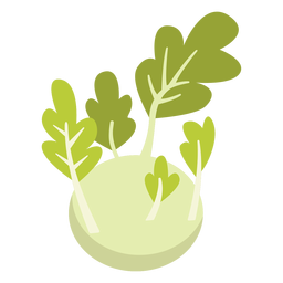 Kohlrabi vegetable flat