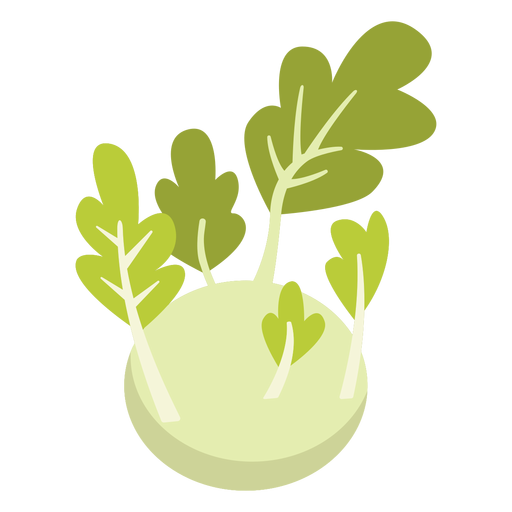 Kohlrabi vegetable flat Transparent PNG