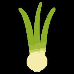 Cebolla verde plana