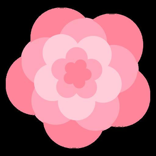 Pink flower large petals flat
