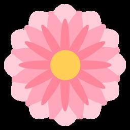 Pink flower thin petals flat