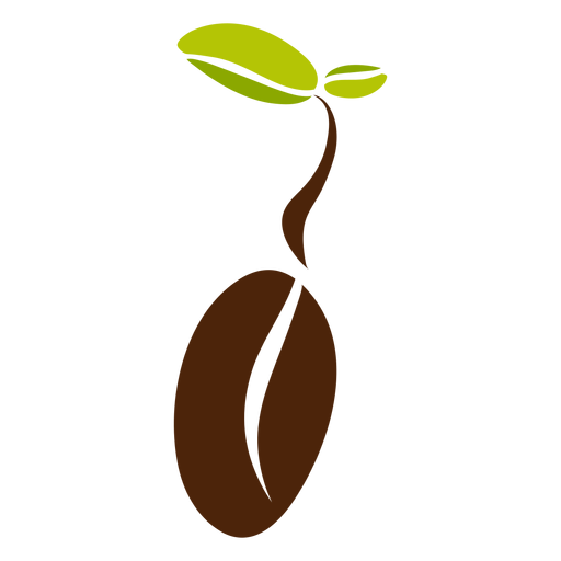 Coffee bean leaves Transparent PNG