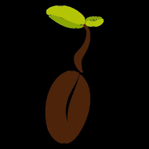 Hojas de granos de café