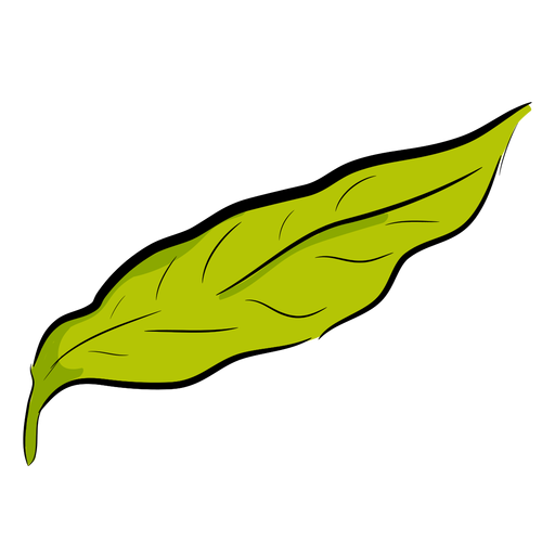 Hoja de cafe Transparent PNG