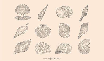 Colección botánica de conchas