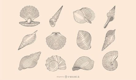 Seashell botanical collection