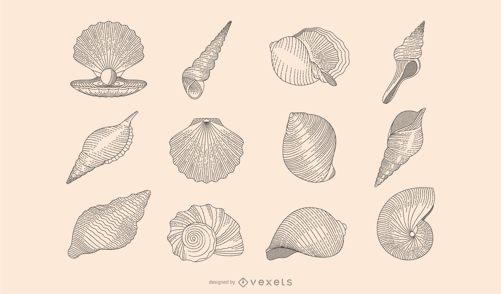 Seashell botanical collection