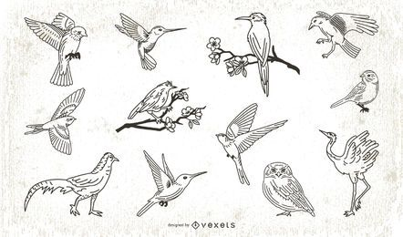 Stroke Style Bird Illustration Collection