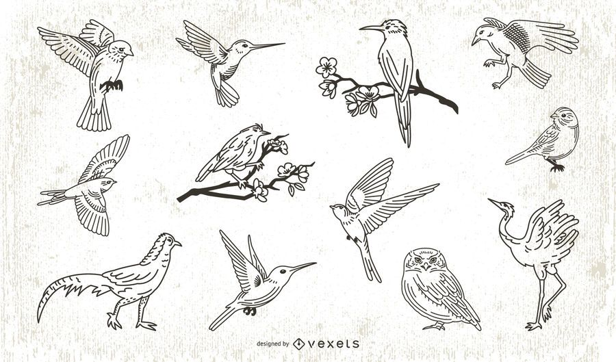 Stroke Style Bird Illustration Collection