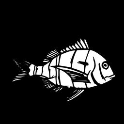 Peixe desenhado à mão