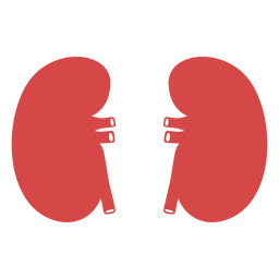 Human kidneys red silhouette