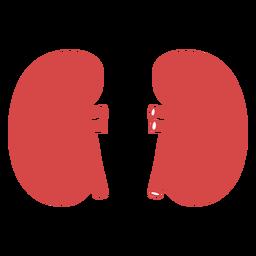 Silhueta vermelha de rins humanos