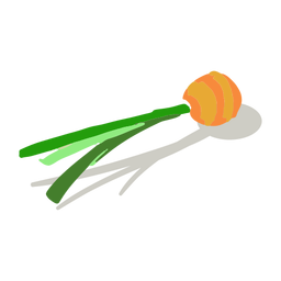 Isométrica superior de zanahoria naranja