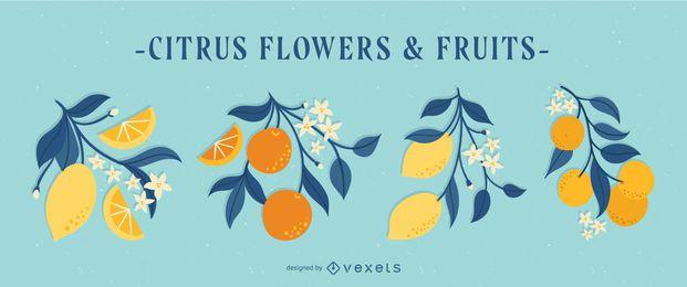Conjunto de ilustración de flores y frutas de cítricos de primavera