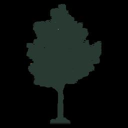Hermoso árbol alto