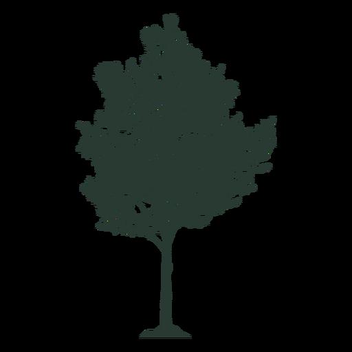 Beautiful tall tree Transparent PNG