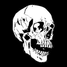 Cráneo dibujado fresco