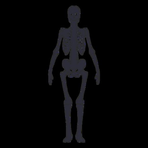 Vista frontal silueta esqueleto