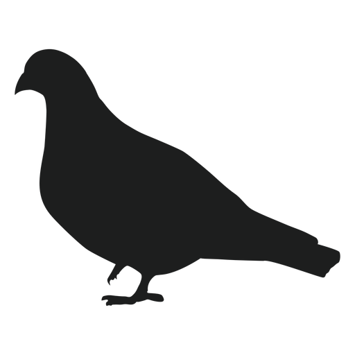 One foot up pigeon