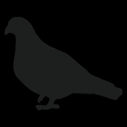 Um pé de pombo