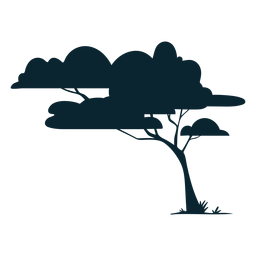 Safari Baum belaubt
