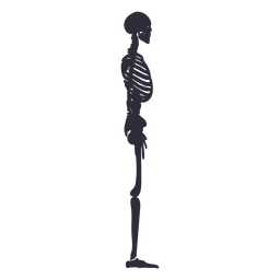 Side view skeleton silhouette