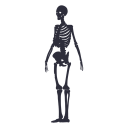 Esqueleto silueta lateral