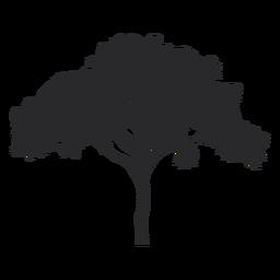 Silhueta de árvore ampla