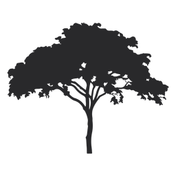 Silhueta de árvore larga