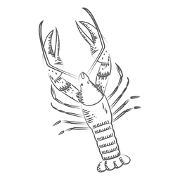 Hand drawn lobster