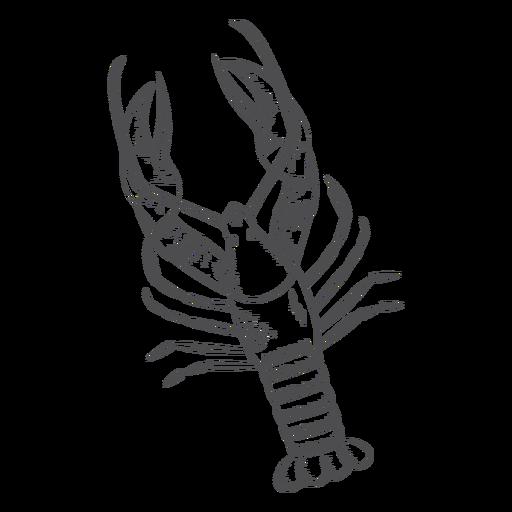 Hand drawn lobster