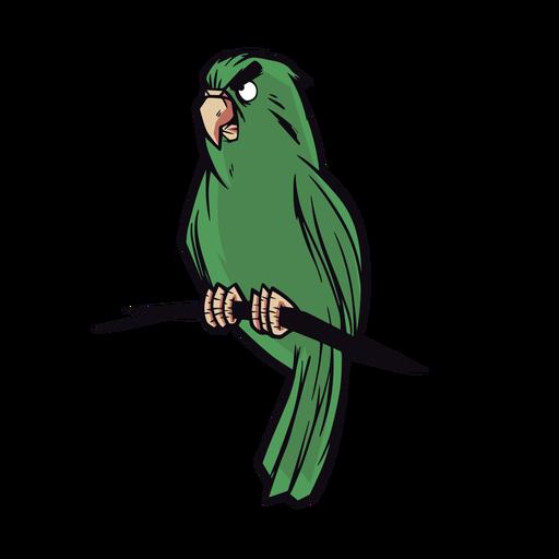 Illustration green parrot
