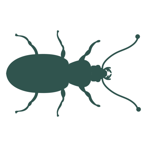 Insect silhouette green bug insect