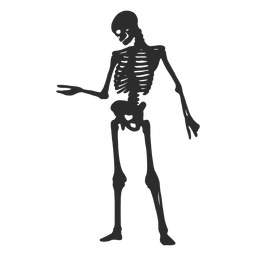 Olhando a silhueta do esqueleto do braço