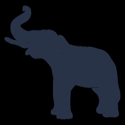 Elephant side view trunk