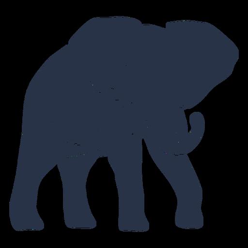 Elefante caminando a la derecha