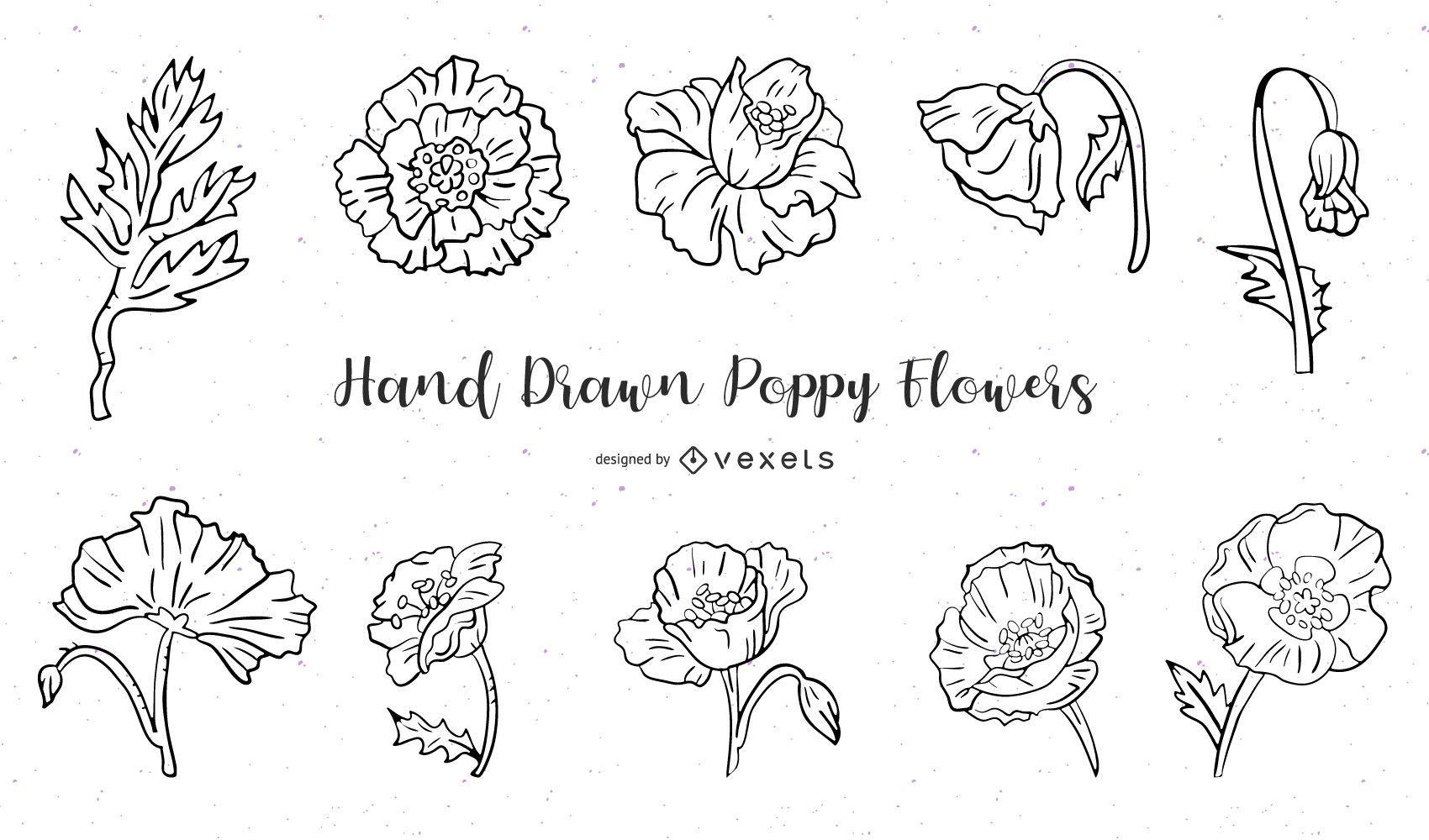 Conjunto de flores amapolas dibujadas a mano