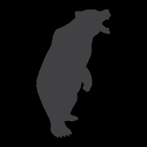 Oso rugiendo silueta oso