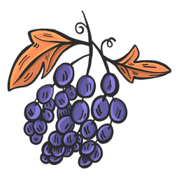 Blue grapes hand drawn