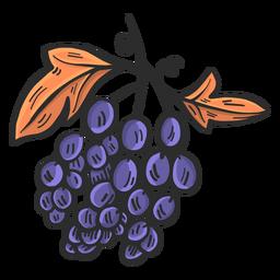 Dibujado a mano uvas azules