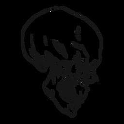 Mão de vista lateral do crânio desenhada