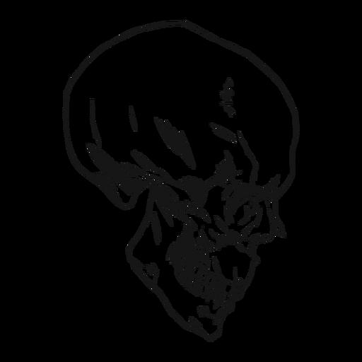 Dibujado a mano vista lateral del cráneo