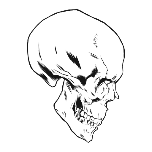 Skull side view hand drawn