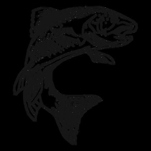 Peixe truta desenhado à mão
