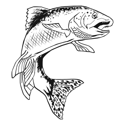 Trout fish hand drawn Transparent PNG