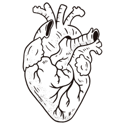Awesome anatomical heart